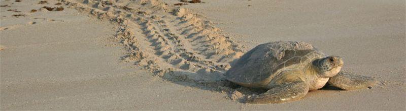 Grand Beach Hotel Surfside- sea turtle awareness program