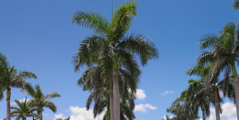 Holiday Fun in Miami